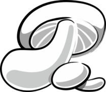 mushroom-md