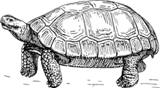 tortoise-md